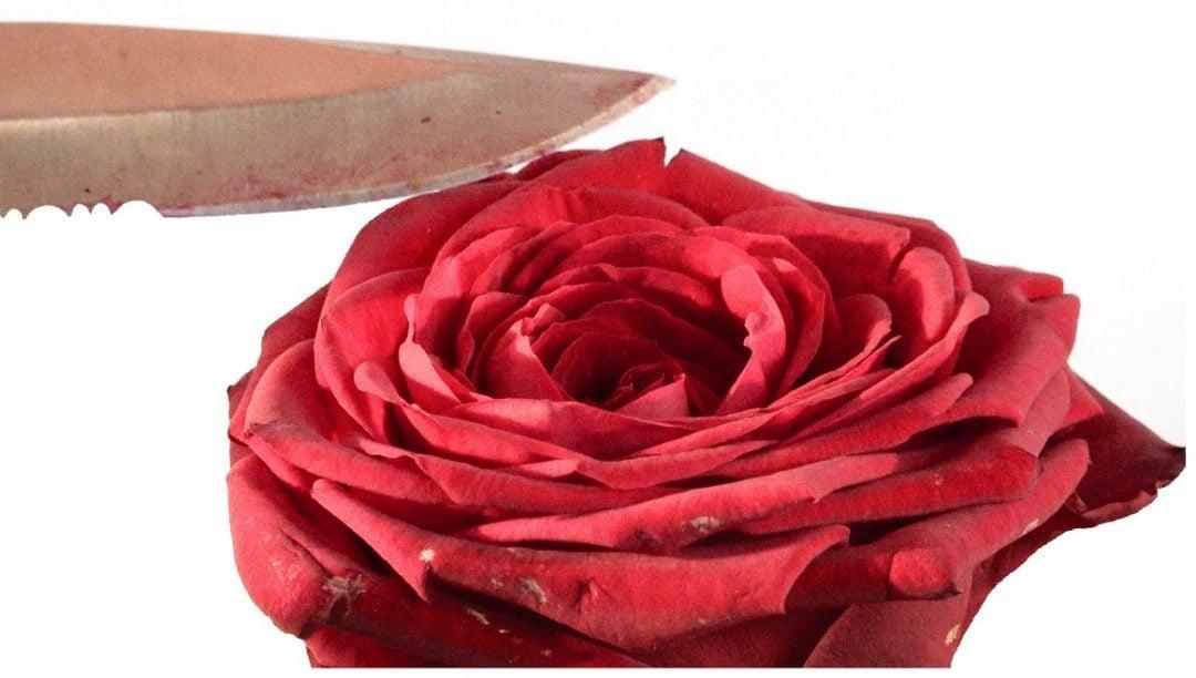 Rose mit Messer als Symbol für weibliche Genitalverstümmelung
